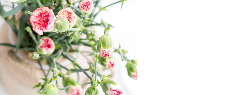 Fondo nuestra floristería