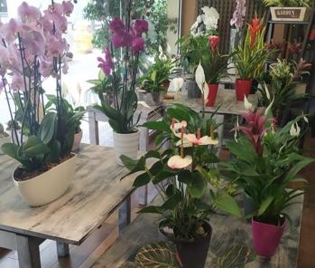 Detall floristeria La Planteta